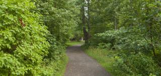 Reitti metsässä