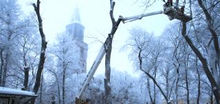 Puiden hoitoa nosturilla Brahenpuistossa