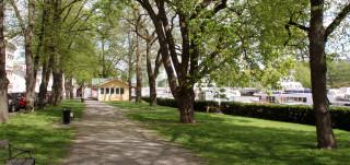 Sairashuoneenpuistoa reunustavat historialliset lehmusrivistöt