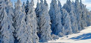 Luminen metsämaisema auringonpaisteessa