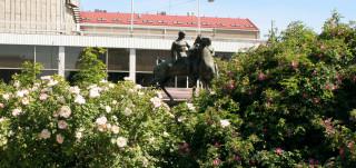 Kuvassa etualalla suuret ruusupensaat, joiden takana näkyy puistossa oleva patsas sekä konserttitaloä