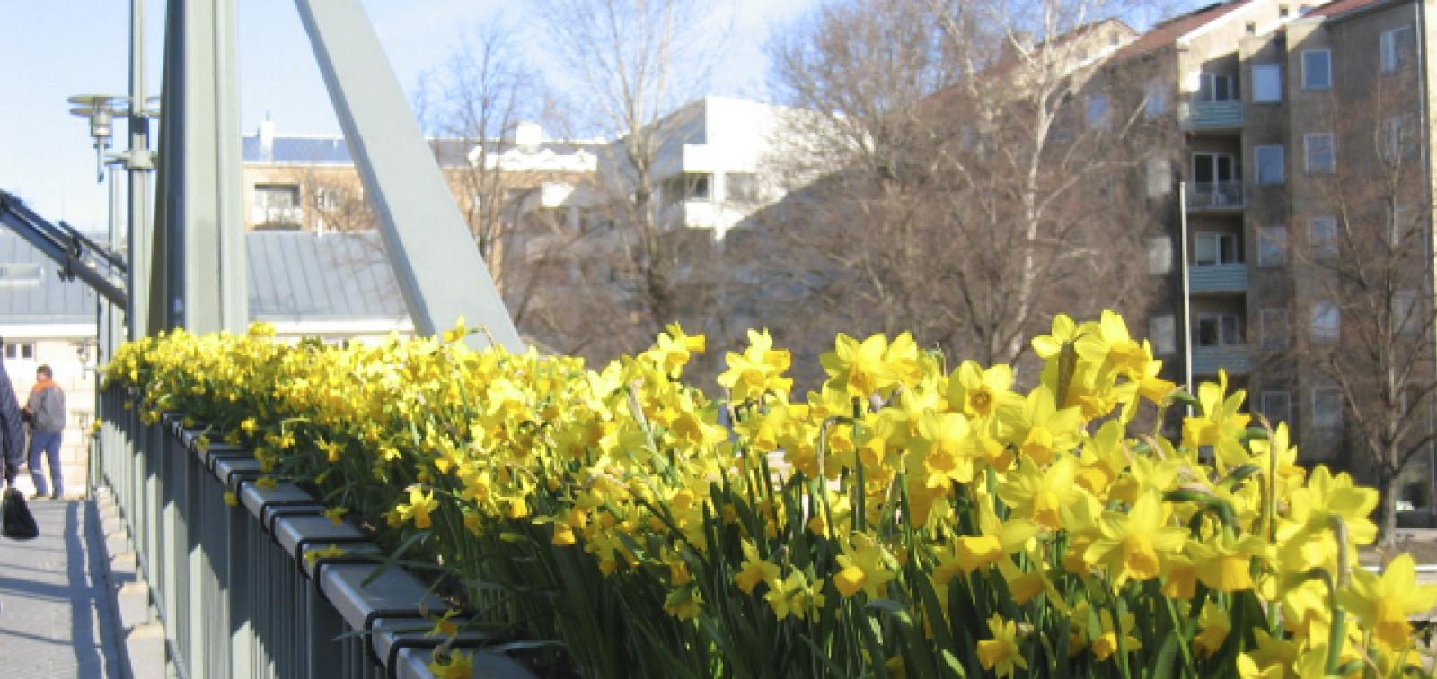 Kukat, silta