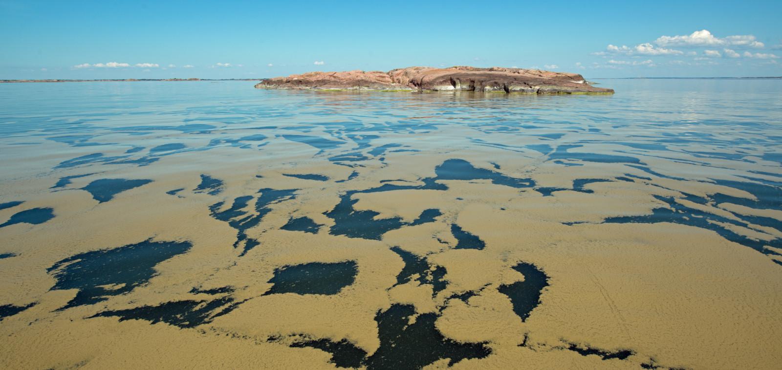 pieni kallioluoto sinilevän peittämällä avomerellä