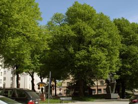 Kuvassa näkyy Borenpuiston vanhoja puita ja veistos.