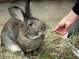 Kania ruokitaan Turun eläinhoitolassa