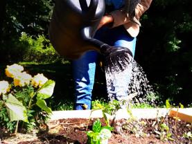 Kuvassa kaupunkiviljelyksen kastelua