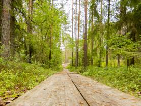 Pitkospuut metsässä