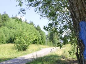 Puussa sininen juoksijamerkki
